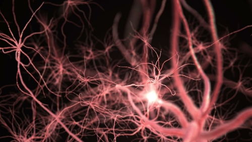 Neurone synapse network